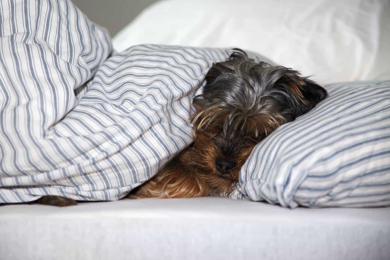 spanie z psem lub kotem